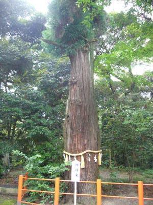 佐原水生植物園(2009年6月27日)49