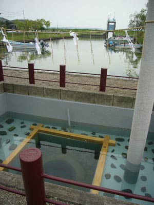 佐原水生植物園(2009年6月27日)50
