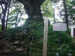 軽井沢(2009年8月24日)8