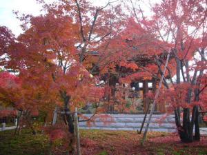 京都(2009年11月29日)3