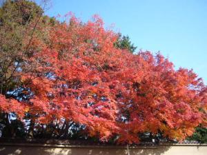 京都(2009年11月29日)8