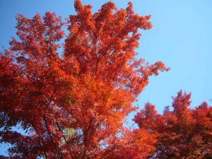 京都(2009年11月29日)9