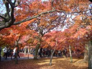 京都(2009年11月29日)10