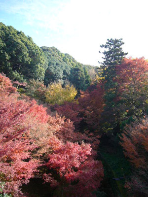 京都(2009年11月29日)11