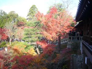 京都(2009年11月29日)12