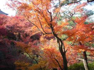 京都(2009年11月29日)13