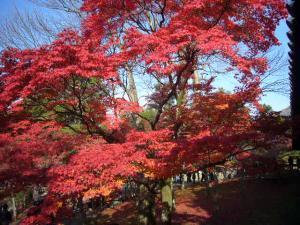 京都(2009年11月29日)14