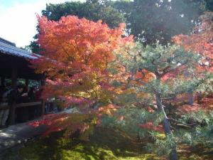 京都(2009年11月29日)15