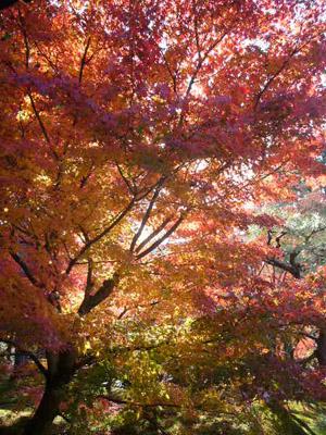 京都(2009年11月29日)16