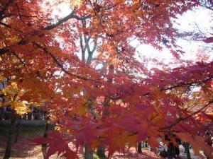 京都(2009年11月29日)17