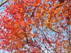 京都(2009年11月29日)19