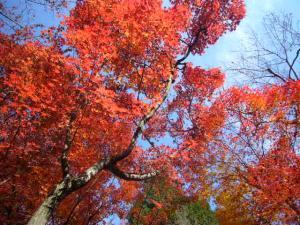 京都(2009年11月29日)20
