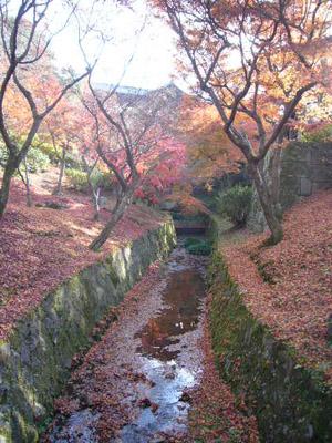 京都(2009年11月29日)21