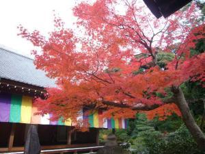 京都(2009年11月29日)26