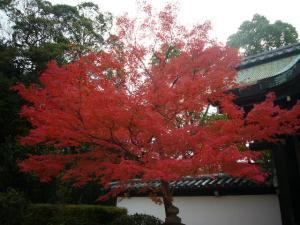 京都(2009年11月29日)27
