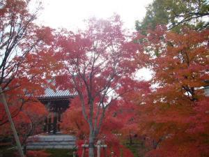 京都(2009年11月29日)31