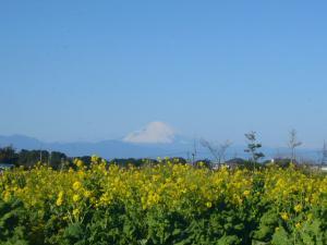 ソレイユの丘(2010年1月2日)