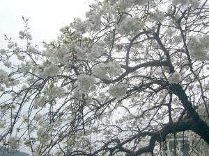 熱海伊豆山神社(2010年4月7日)1