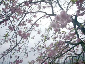 熱海伊豆山神社(2010年4月7日)2