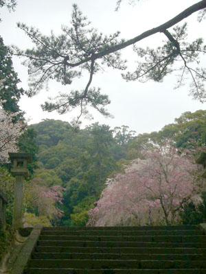 熱海伊豆山神社(2010年4月7日)4