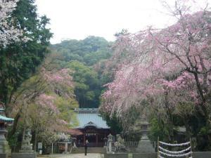 熱海伊豆山神社(2010年4月7日)5