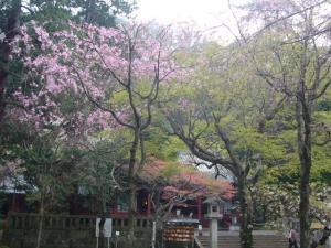 熱海伊豆山神社(2010年4月7日)6