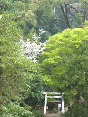 熱海伊豆山神社(2010年4月7日)7