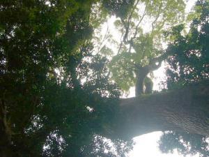 熱海伊豆山神社(2010年4月7日)8