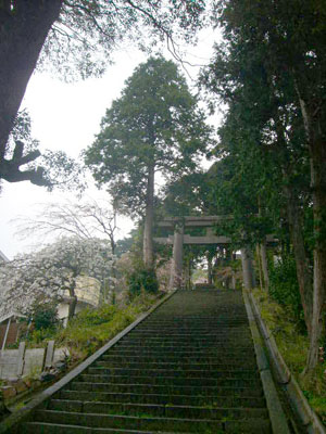 熱海伊豆山神社(2010年4月7日)10