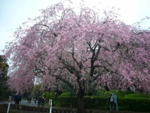 熱海伊豆山神社(2010年4月7日)14