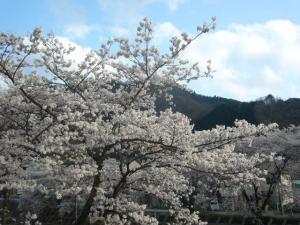 高尾山39