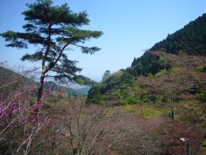 大山阿夫利神社6