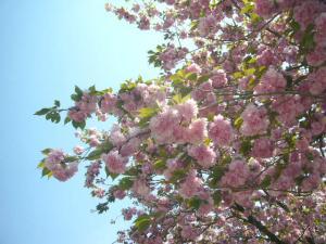 足利フラーパーク、浅草(2010年5月3日)27
