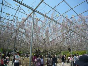 足利フラーパーク、浅草(2010年5月3日)30