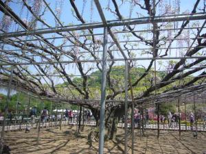 足利フラーパーク、浅草(2010年5月3日)31