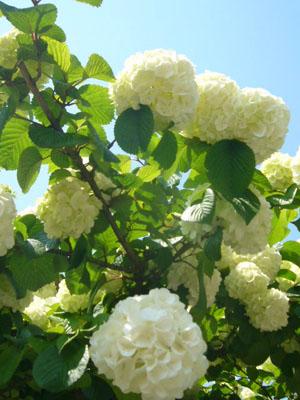 足利フラーパーク、浅草(2010年5月3日)34