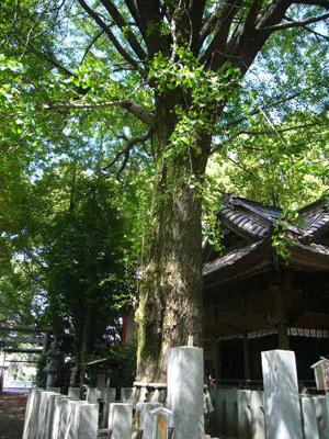 田無神社7