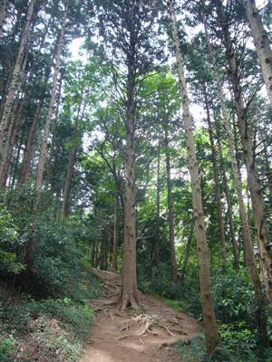 大平山・古峰神社4
