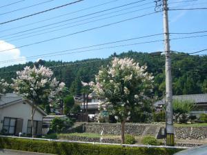 武すし、入間滝(2010年8月30日)6