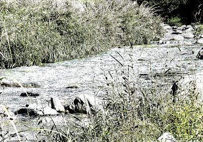 秋枯れの渓