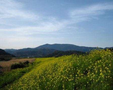 新村から井原山 095