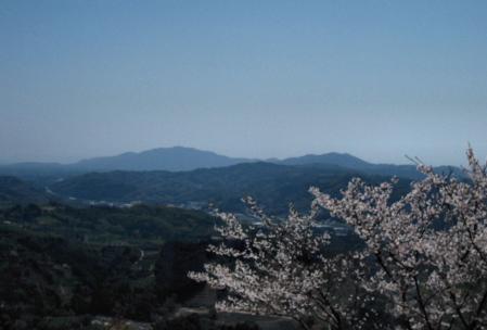 清水の桜 172