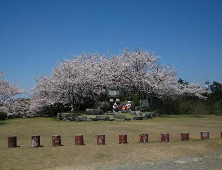 清水の桜 157