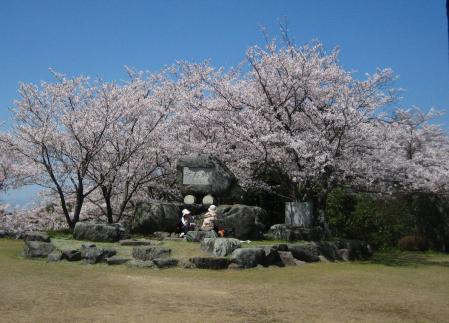 清水の桜 170