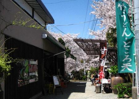 清水の桜 074