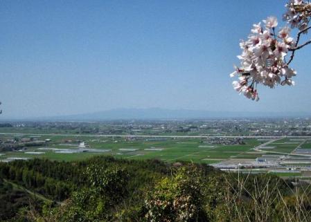 清水の桜 019