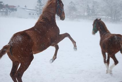 1・新・吹雪