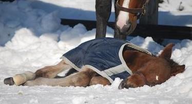 2・パドック・雪の布団