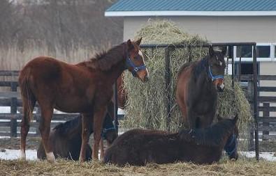 3・寒・1歳牝馬