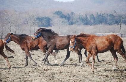 3・嵐・牝馬2